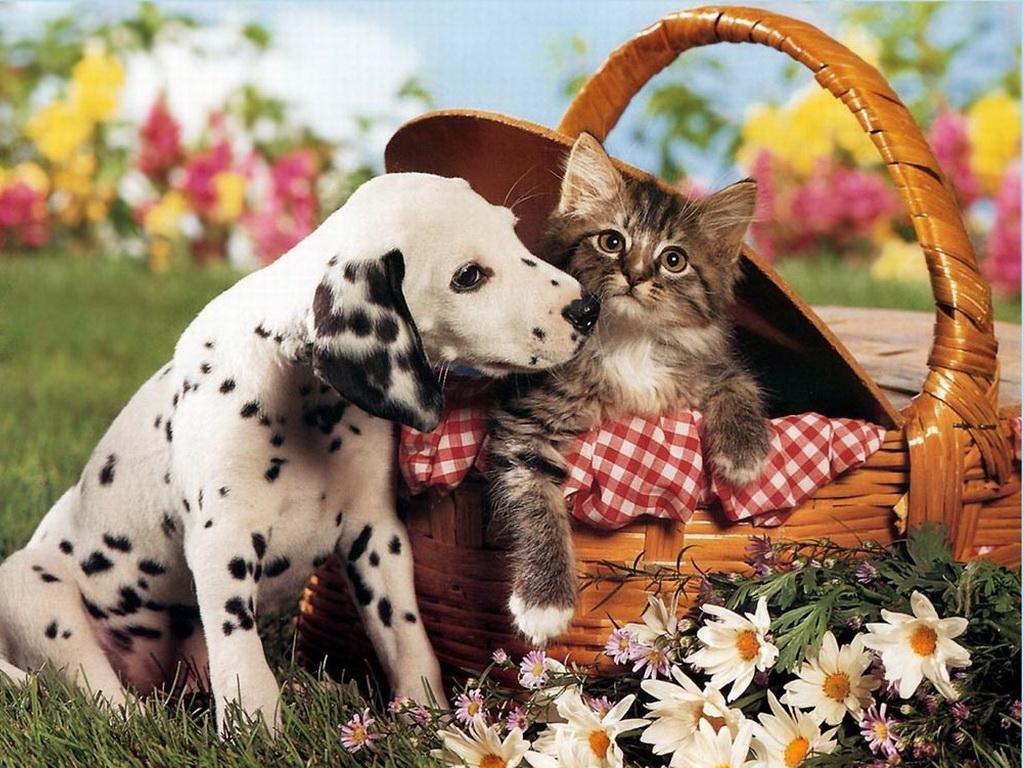 фото котят и щенят.