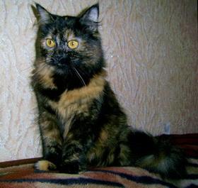 Кошка Масяня дает советы